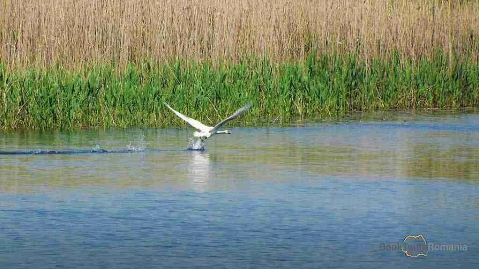 Danube Delta - ideal for birdwatching