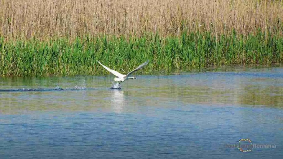 Danube Delta - ideal for birdwatching