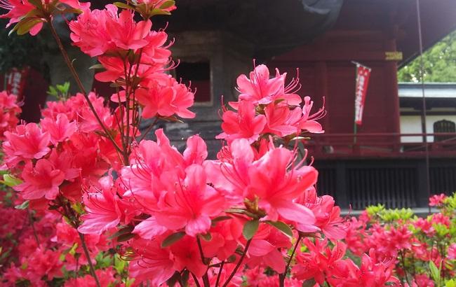 メインの桜の時期が終わった上野は…