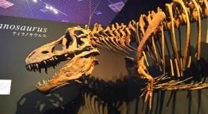 """""""ティラノサウルス""""  …「恐竜博2019」"""