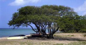 arbre-toxique-dangereux-750x400