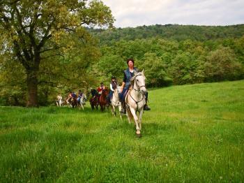 RUTA A CABALLO Un tranquilo paseo a caballo puede ser una buena forma de recorrer bosques y montañas de Asturias. Una forma distinta de conocer su paisaje.