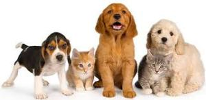 As beloved members of our family, our pets deserve the best.