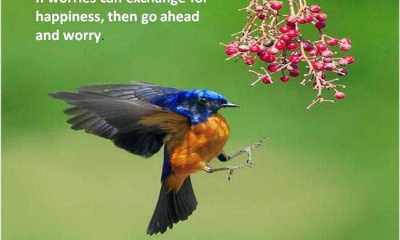 If Worries can exchange for happiness, then go ahed and worry - Sad Love Quote