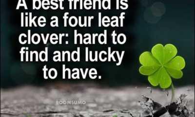 best friends forever quotes Four Leaf cute friend captions