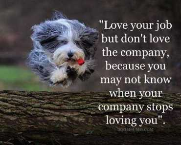 sayings about love relationship advice Love your job, Not a Company. - relationship Quotes