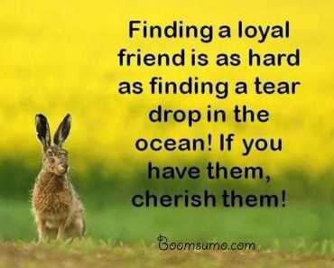 Friendship Sayings and Friendship Quotes
