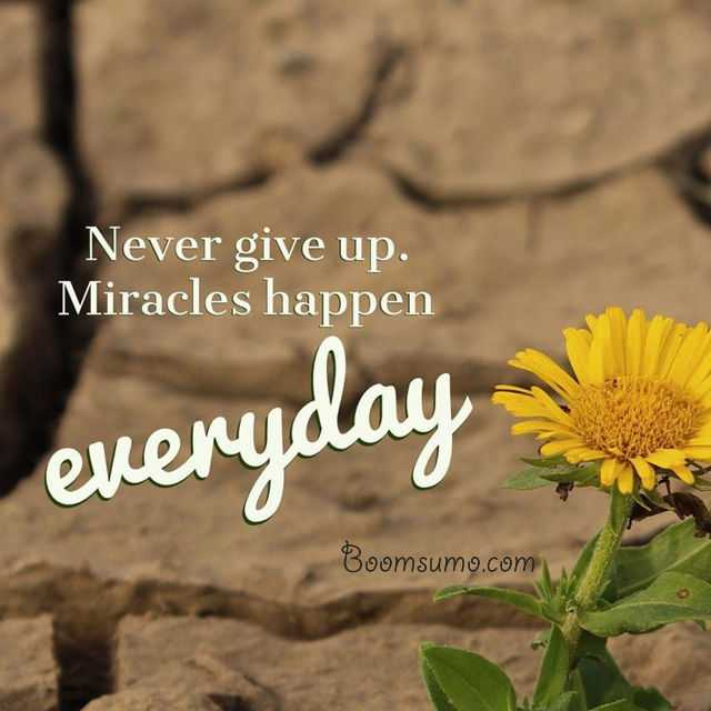 Short Quotes About Life 'Miracles Happen Everyday, Cool
