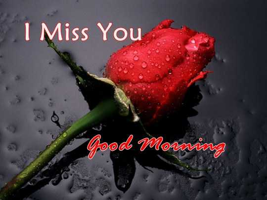 Best Good Morning Quotes For Her I Miss You, Good Morning My Love