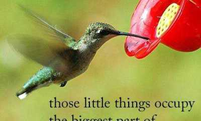 Inspirational life Quotes about positive Sometimes Little things Got better value