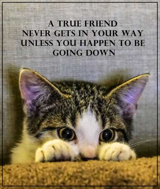 Best Friendship Quotes: A True friend Never Cross Your Path, Unless