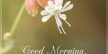Good Morning Quotes Friends Sayings Good Morning
