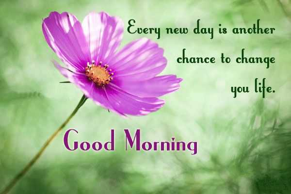 Morning Life Quotes Prepossessing Good Morning Quotes Life Sayings Good Morning Every New Day