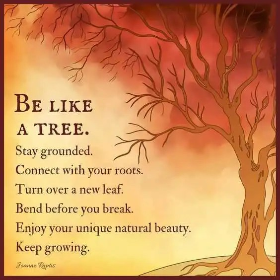 Positive Life Quotes Life Sayings Be Like A Tree Stay Grounded