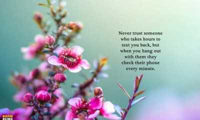 funny inspirational Quotes Never trust someone