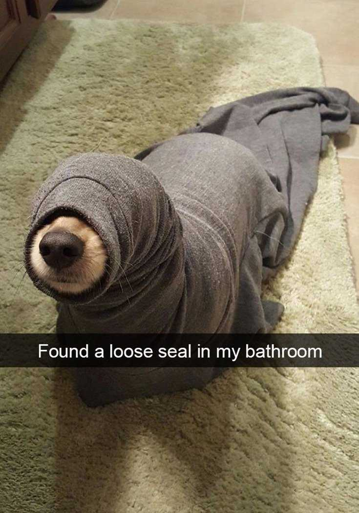24 Of The Best Funny Memes Funny Pictures 15