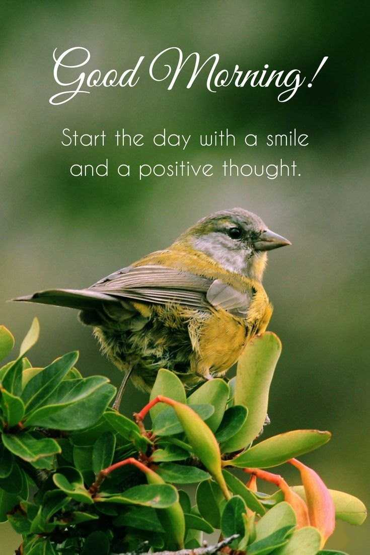 28 Good Morning Quotes with Beautiful Images 16