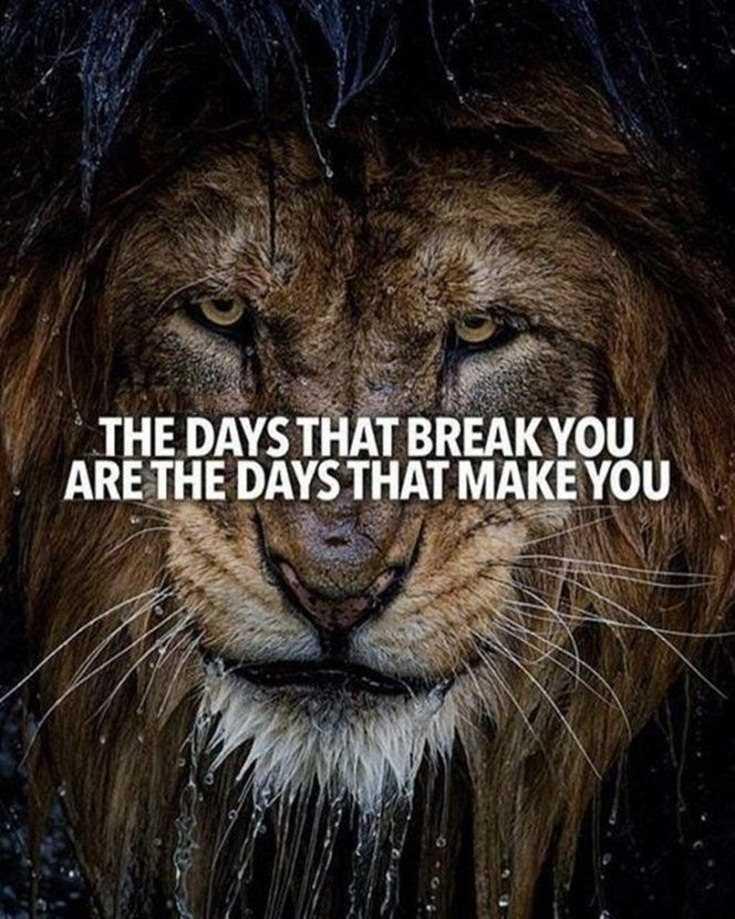 58 Motivational Quotes Quotes About Success 43