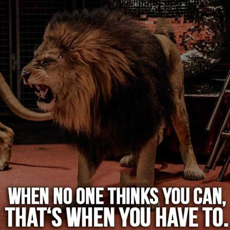 58 Motivational Quotes Quotes About Success 57