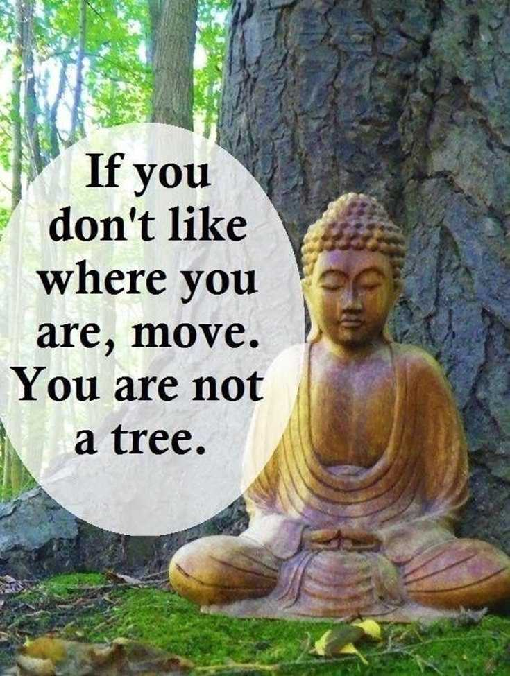 100 Inspirational Buddha Quotes And Sayings 15