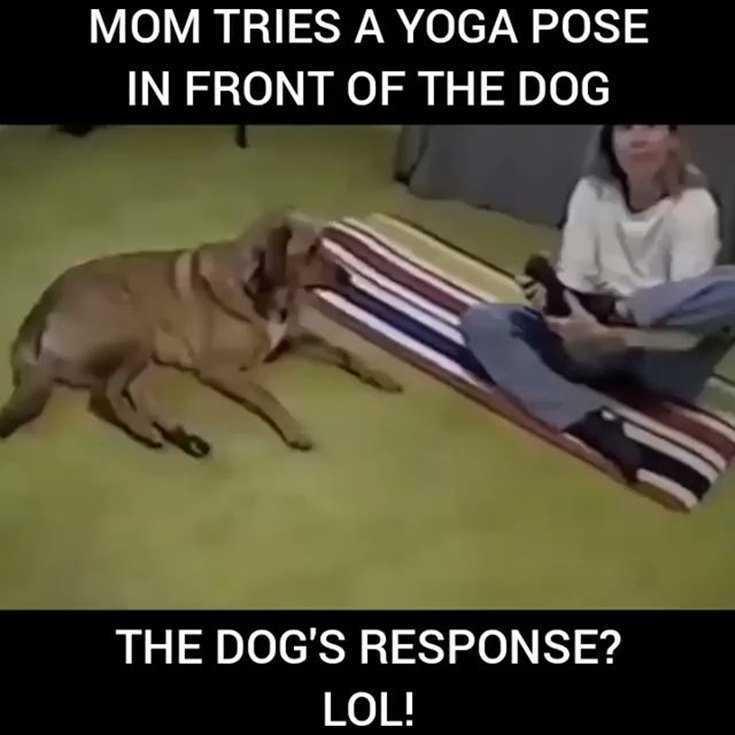 38 Hilarious Memes Guaranteed To Make You Laugh 20
