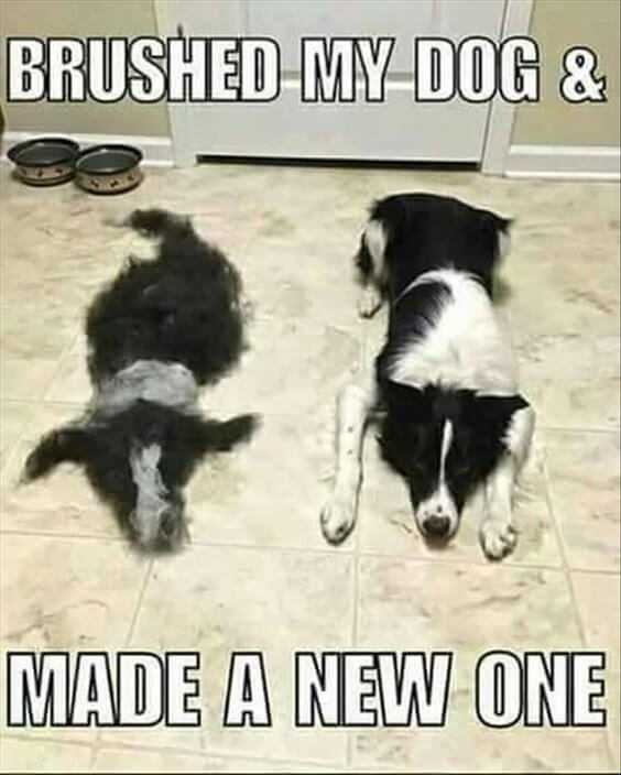 28 Funny Animal Memes With Captions and Funny Pictures 10