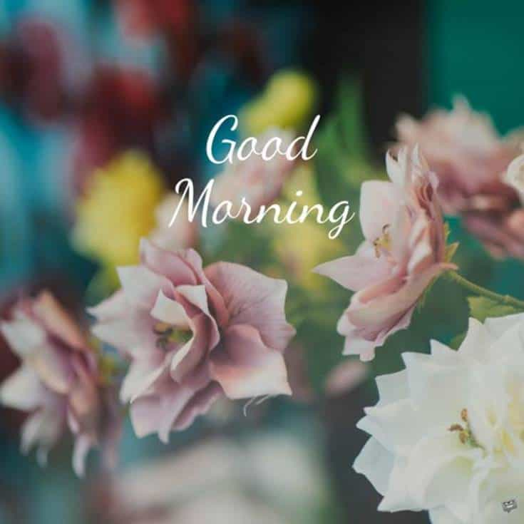 Best Good Morning Flowers quotes