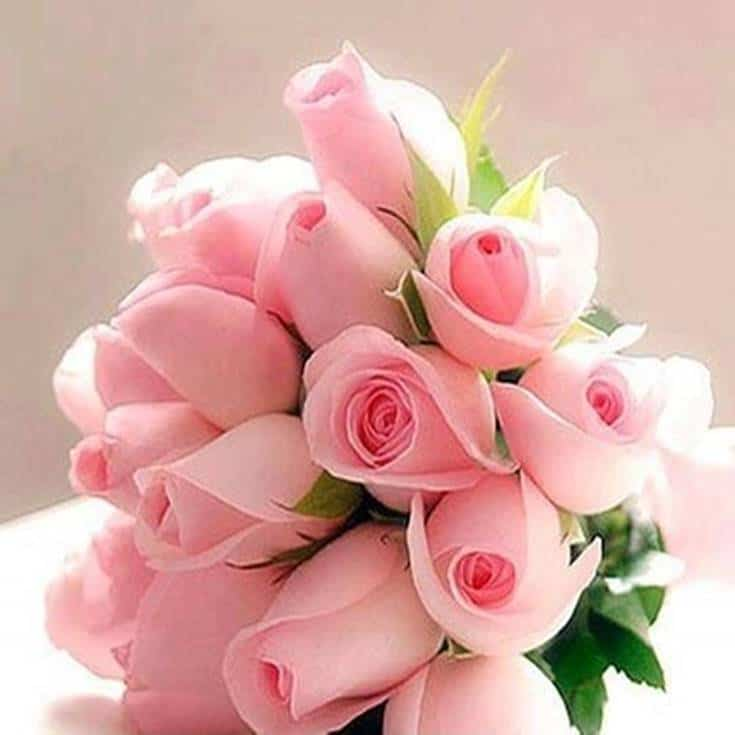 Good Morning Flowers Pink rose images