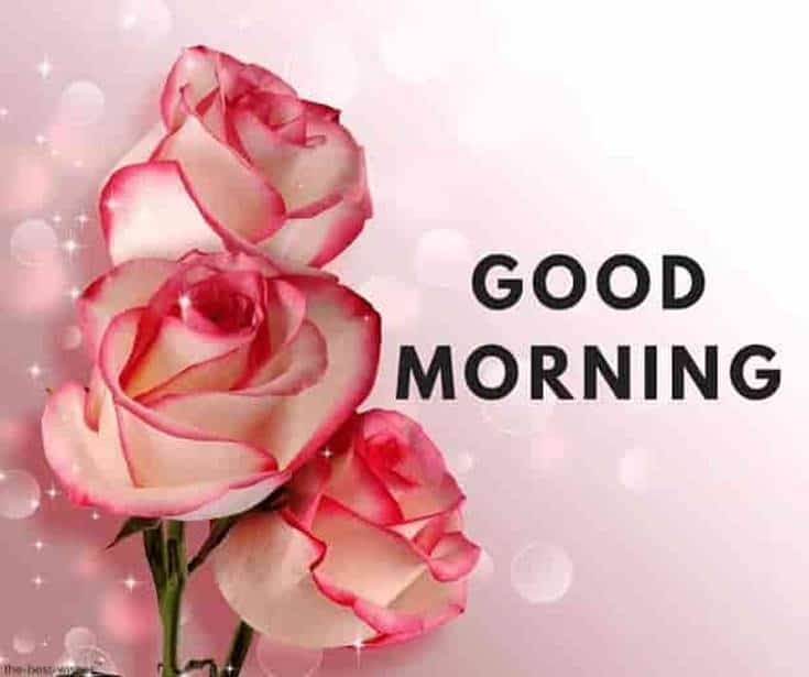 56 Best Good Morning Flowers images 7