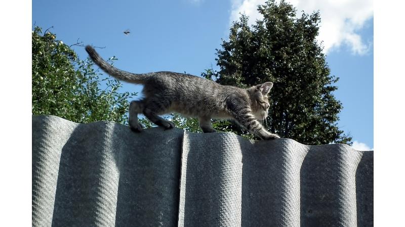 kitten-454282_1280-1