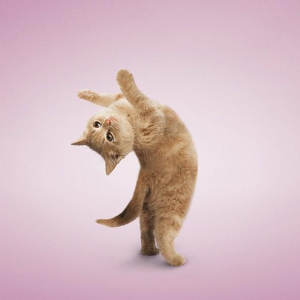 Yoga, Cat