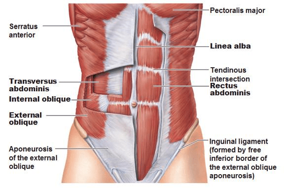 Diastasis Recti: An Overview – Boot Camp & Military Fitness Institute