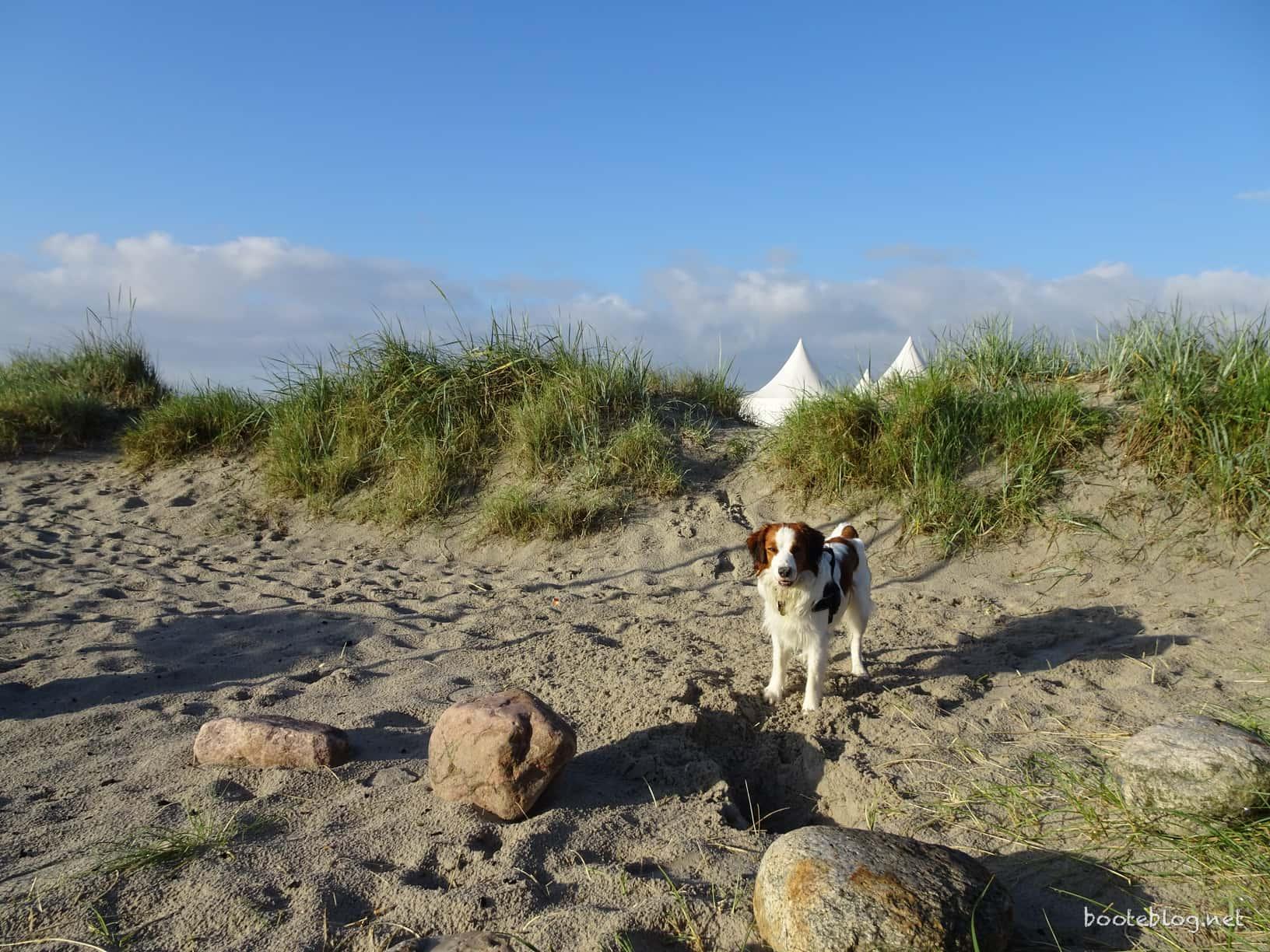 Damp morgens um sieben Uhr: Schönes Licht, lange Schatten, hübscher Hund.