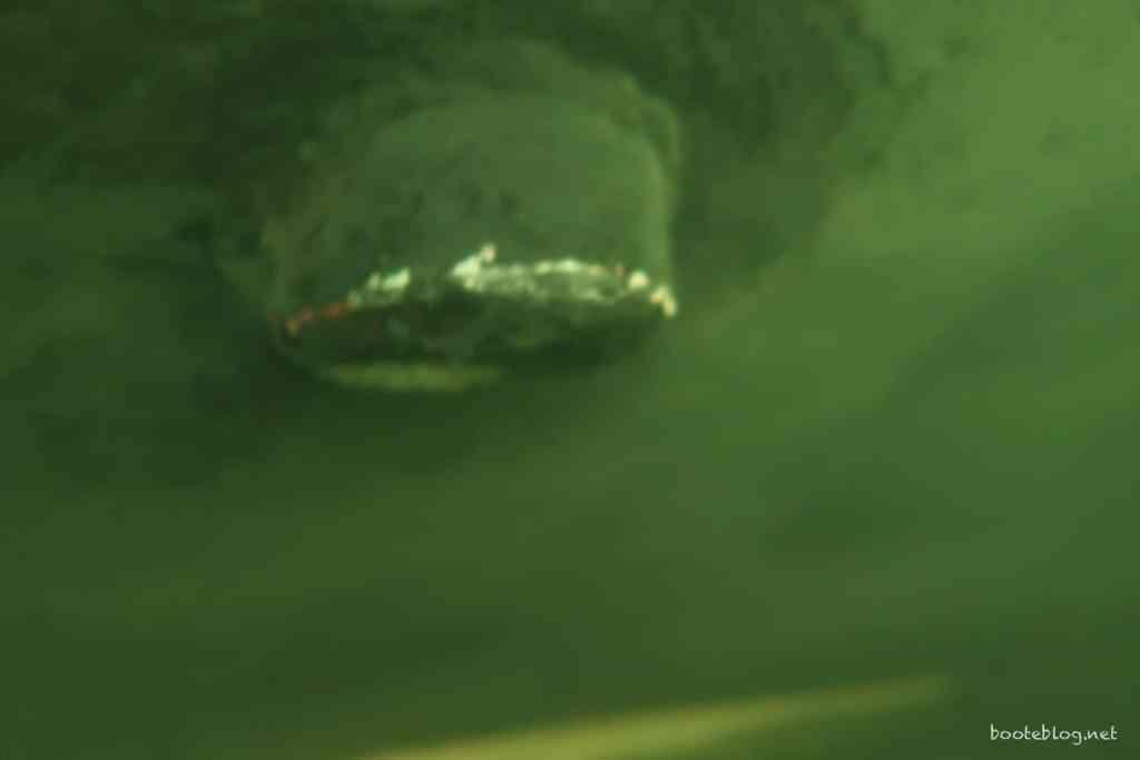 Die Halterung des Echolot-Sensors hat auch etwas Farbe verloren (Unterwasserfoto vom Taucher).