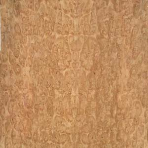 eucalyptus-pom