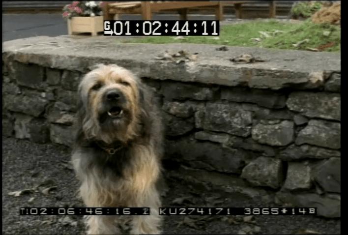 vlcsnap-2020-05-07-21h48m37s345