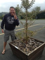 I really want you to know that this Kauri tree is THREE years old!