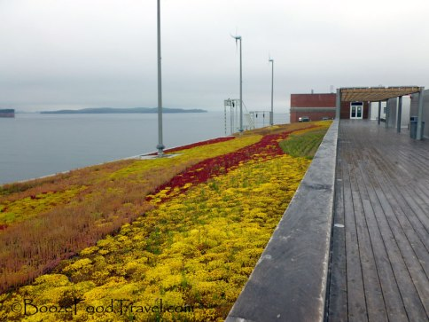 The colorful rooftop garden on a misty morning