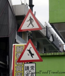 Cat and people crossing