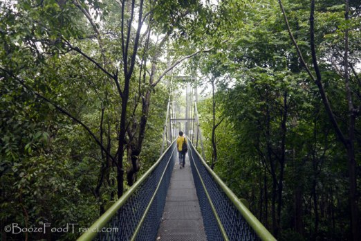 The HSBC TreeTop Walk