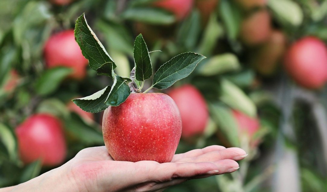 Apple in Hand- Reaching back from 100 days sober with tips on tackling triggers and slips