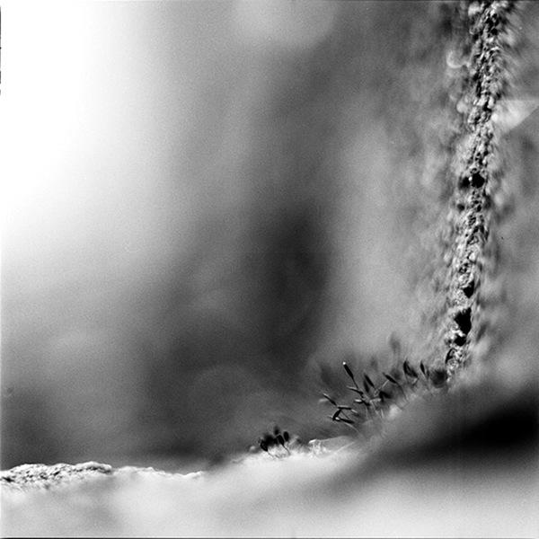 Desolation - Isolation by hern42