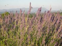 Il campo delle erbe officinali, di Joseph a Pliskovica