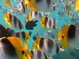Nemo Snorkeling Tour Bora Bora