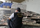 Wildlife and forestry crime: Worldwide seizures in global INTERPOL-WCO operation