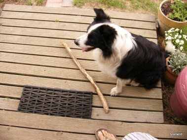 stick please