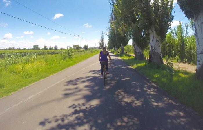 Biking past the vineyards