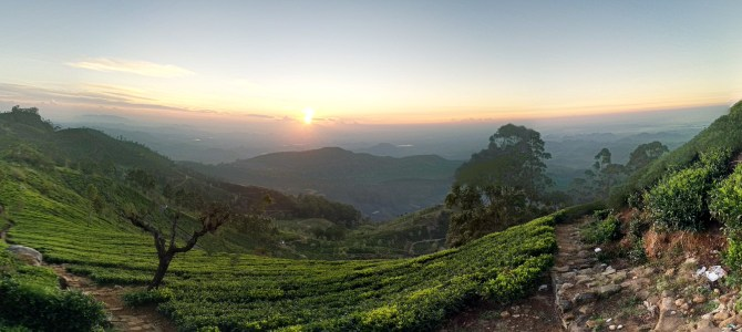Train Tracks and Tea Fields: Nuwara Eliya and Haputale