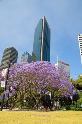 The skyscrapers tower over you behind circular quay station whilst in the surrounding gardens the beautiful purple flowers of the Jacaranda tree littler the pavements