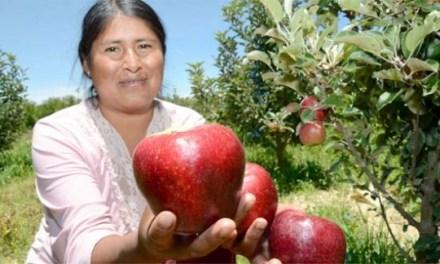 Adiós a la Patagonia re verde: Cuando el fracking le ganó a las frutas